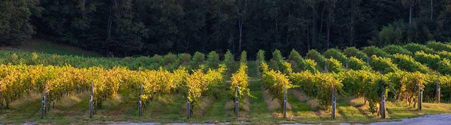 Hendersonville Wineries